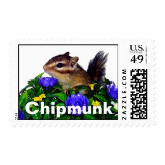 Chipmunk & flower 2