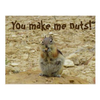 Chipmunk Funny Postcard