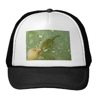 Chipmunk hambriento gorras