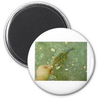 Chipmunk hambriento imán redondo 5 cm