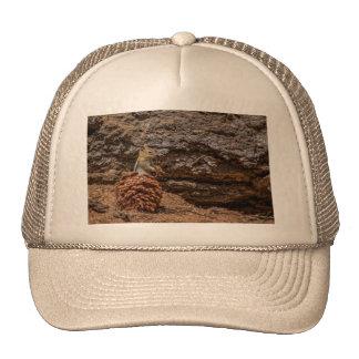 Chipmunk Harvest Trucker Hat
