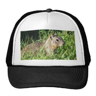 Chipmunk hat
