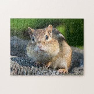 Chipmunk hinchado de Cheeked Puzzles Con Fotos