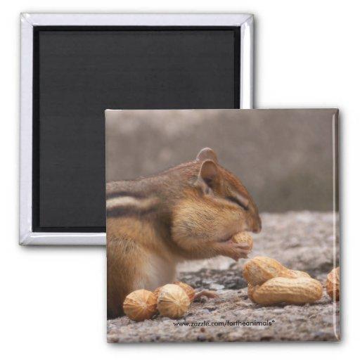 Chipmunk - imán