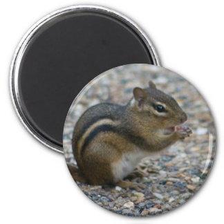 chipmunk imán redondo 5 cm