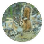 Chipmunk in Glacier National Park I Classic Round Sticker