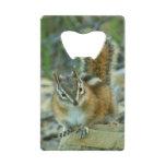 Chipmunk in Glacier National Park I Credit Card Bottle Opener