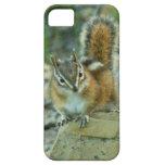 Chipmunk in Glacier National Park I iPhone SE/5/5s Case