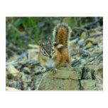 Chipmunk in Glacier National Park I Nature Photo Postcard