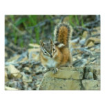 Chipmunk in Glacier National Park I Photo Print