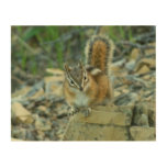 Chipmunk in Glacier National Park I Wood Wall Art