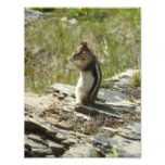 Chipmunk in Glacier National Park II Nature Photo