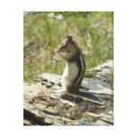 Chipmunk in Glacier National Park II Nature Photo Canvas Print