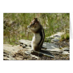 Chipmunk in Glacier National Park II Nature Photo Card