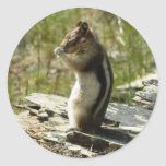 Chipmunk in Glacier National Park II Nature Photo Classic Round Sticker