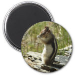 Chipmunk in Glacier National Park II Nature Photo Magnet
