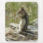 Chipmunk in Glacier National Park II Nature Photo Mouse Pad