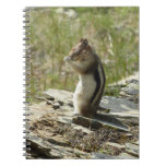 Chipmunk in Glacier National Park II Nature Photo Spiral Notebook