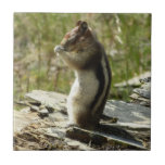 Chipmunk in Glacier National Park II Nature Photo Small Square Tile
