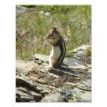 Chipmunk in Glacier National Park II Photo Print