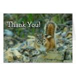 Chipmunk in Glacier National Park Thank You Card
