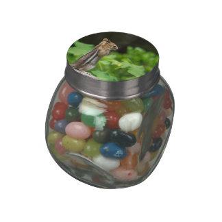 Chipmunk In South Lake Tahoe Glass Jar