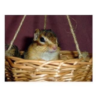chipmunk in the basket 1 postcard