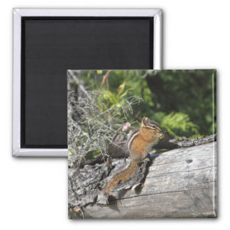 Chipmunk in the Forest Refrigerator Magnets