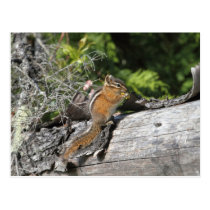 Chipmunk in the Forest Postcard