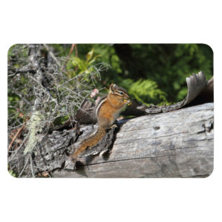 Chipmunk in the Forest Rectangle Magnet