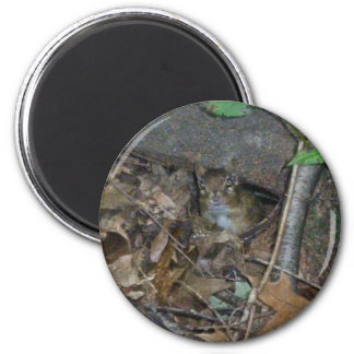 Chipmunk in Woods Coordinating Items Magnet