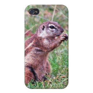 Chipmunk iPhone 4 Cases