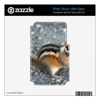 Chipmunk iPod Touch 4G Decal