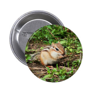Chipmunk lindo pin redondo 5 cm