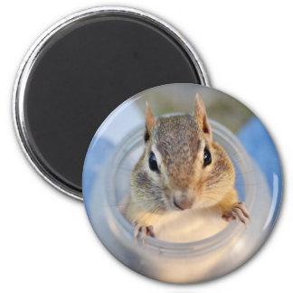 Chipmunk lindo que se sienta en un envase de comid imán