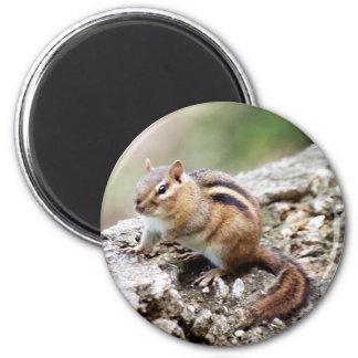 Chipmunk Magnet
