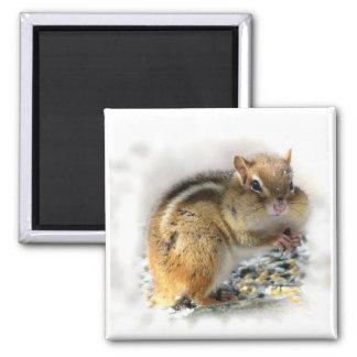 Chipmunk 2 Inch Square Magnet