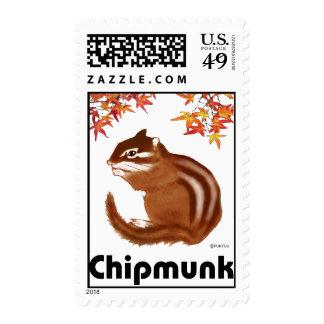 chipmunk & maple