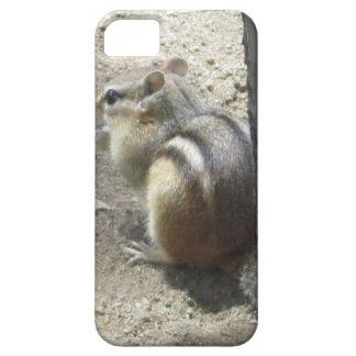 Chipmunk Midland Ontario iPhone 5 Covers