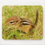 Chipmunk minúsculo pequeñito del bebé tapetes de raton