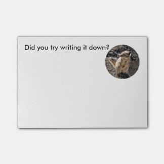 Chipmunk Notes