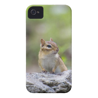 Chipmunk on a rock iPhone 4 Case-Mate case