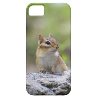 Chipmunk on a rock iPhone SE/5/5s case