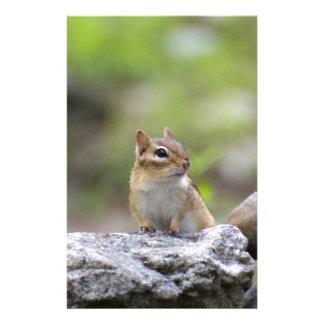Chipmunk on a rock stationery