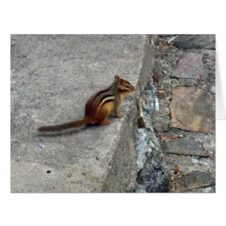 Chipmunk on Step-Blank Card