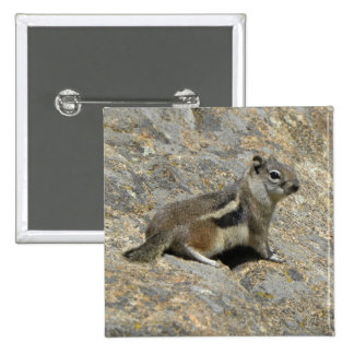 Chipmunk on the rocks 2 inch square button