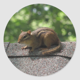 Chipmunk on the Roof Classic Round Sticker