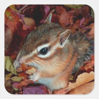 Chipmunk, otoño (10) foto calcomania cuadradas personalizadas