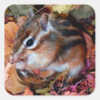 Chipmunk, otoño (10) foto pegatinas cuadradas personalizadas