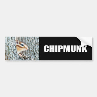Chipmunk photo (17-4) bumper sticker